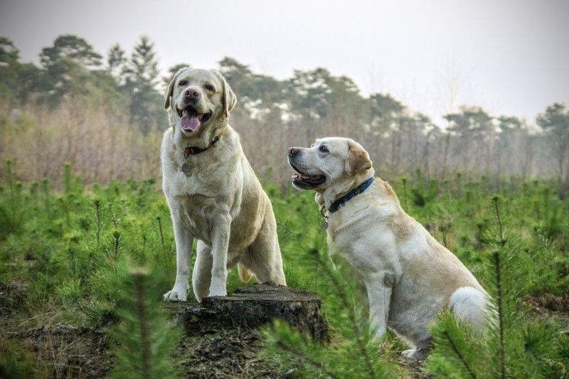 Hundefoder til alle racer og hundetyper hos Simbas Foder