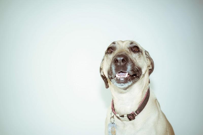 Giv din hund et lækkert halsbånd i cool, råt eller sødt design