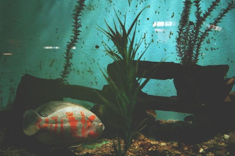 LED belysning til akvariet giver et flot lys og er energibesparende