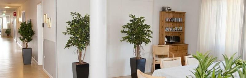 Vælg mellem en lang række forskellige former for kunstige planter til virksomheden