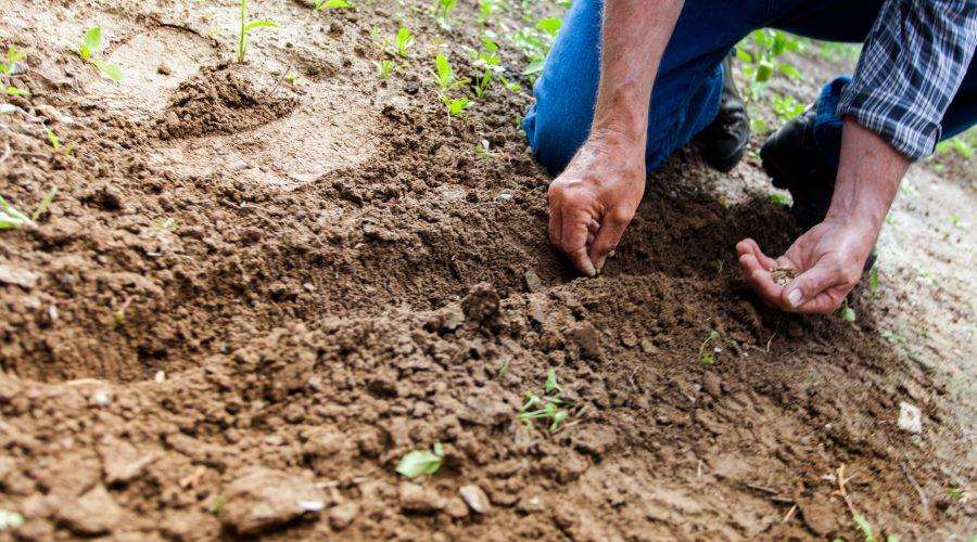 Vikarbureau med speciale i gartneri, landbrug og skovbrug